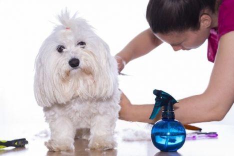 thumb-tecnicas-avanzadas-de-peluqueria-canina