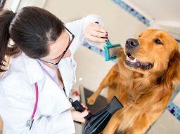 cinco-razones-por-la-que-debes-de-llevar-a-tu-perro-a-la-peluqueria-canina