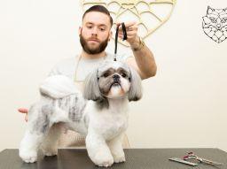 peluqueria-canina-a-donde-ir-el-centro-de-madrid