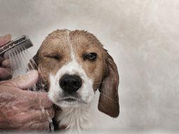 peluqueria-canina-que-ofrecen-servicio-a-domicilio-en-barcelona