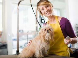 peluqueria-canina-5-cursos-online-gratis