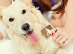 peluquera-canina-servicio-a-domicilio-en-valencia