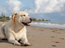 top-5-playas-dog-friendly-en-espana